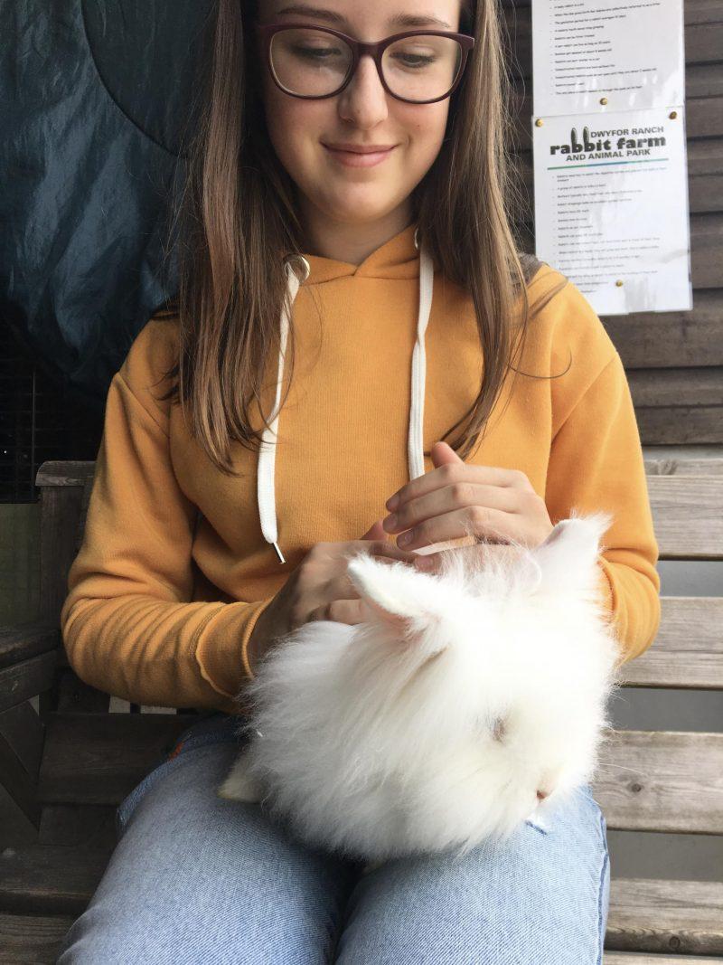 rabbit farm north wales