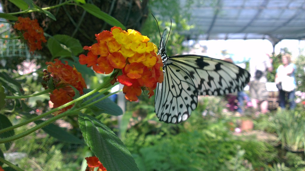 Berkeley Castle butterfly house