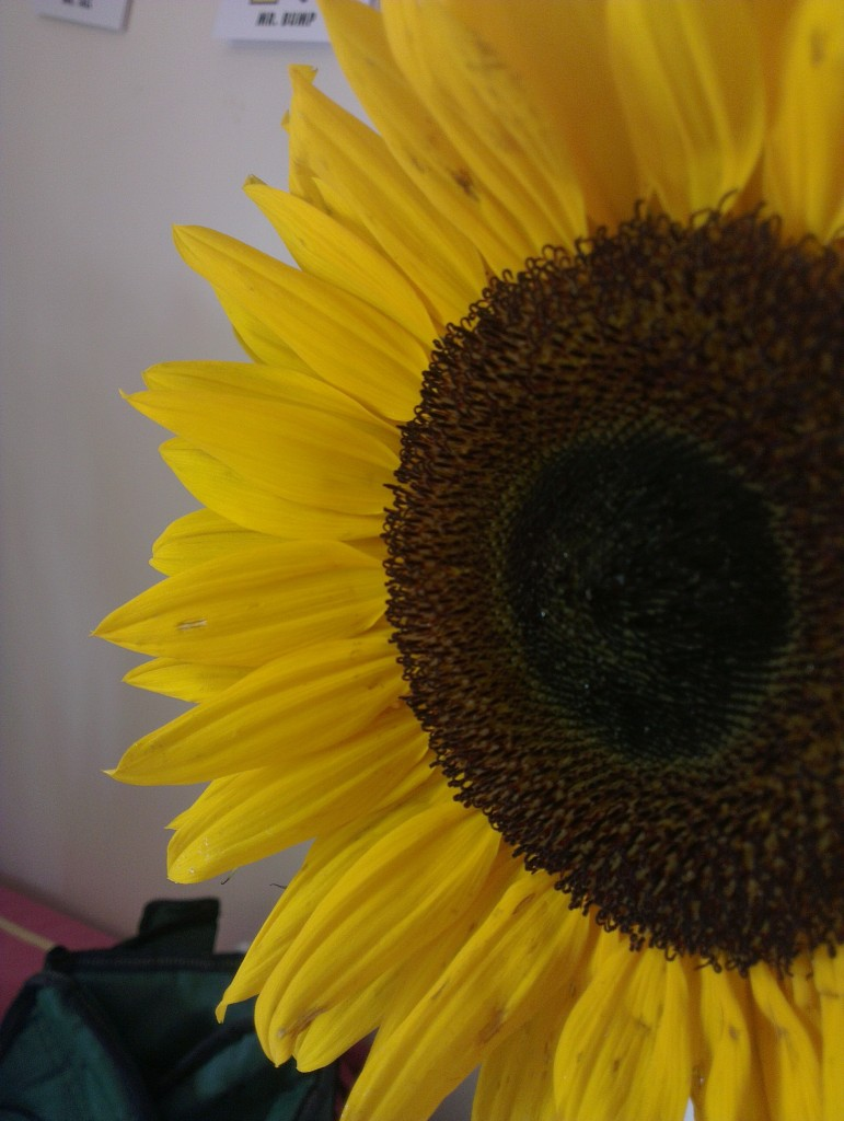 At the end of July it was Bee's birthday. She was 18 and we had a party for all of our family. She was given these sunflowers as a present.