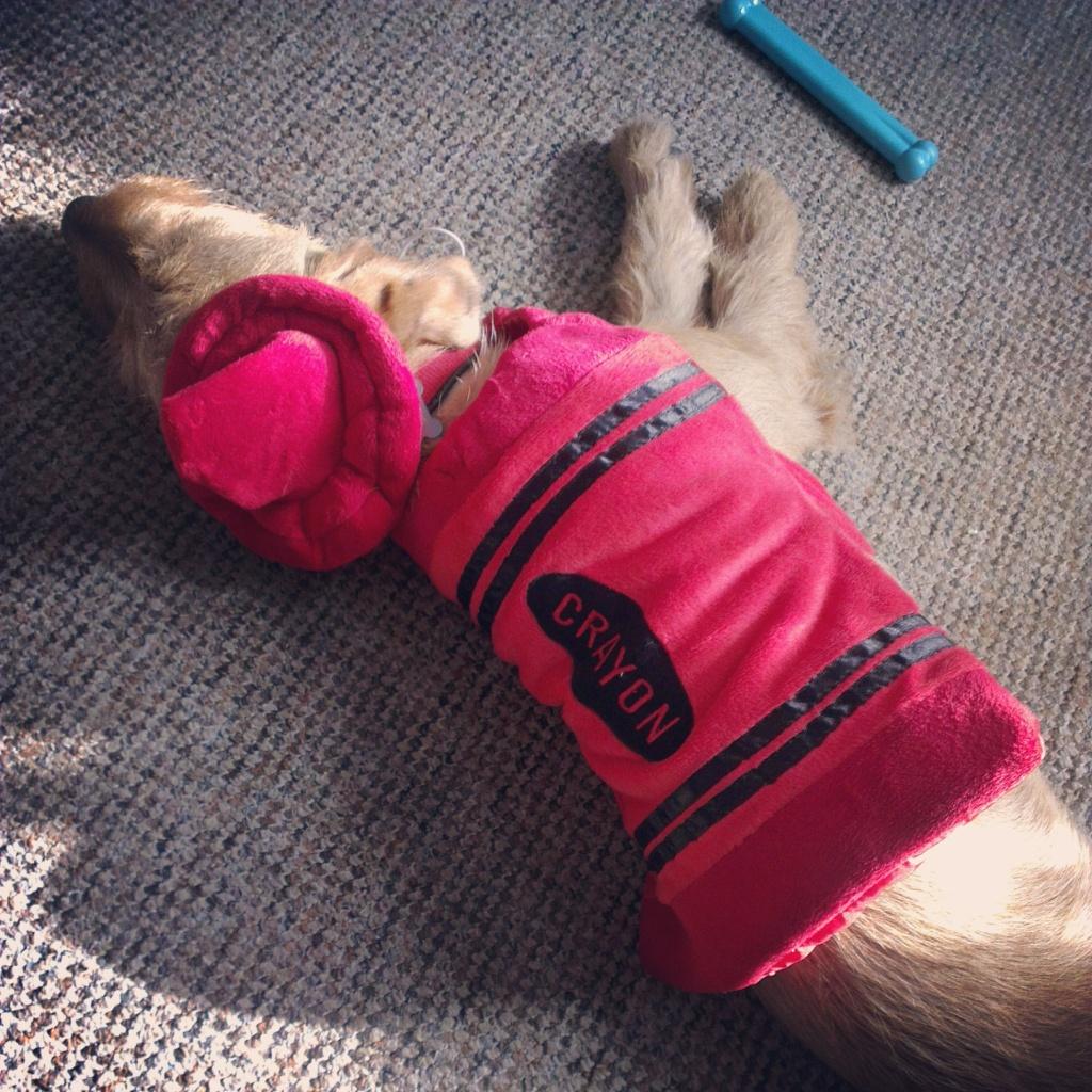 Dog crayon costume