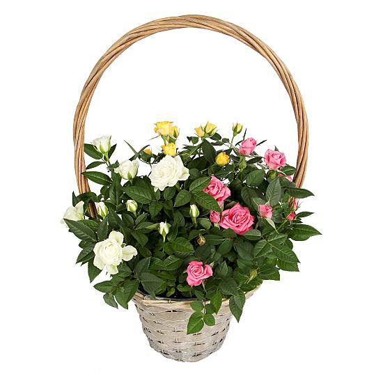 rose basket delivered