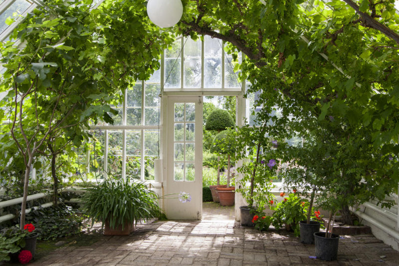 conservatory with lots of plants, family gets bigger