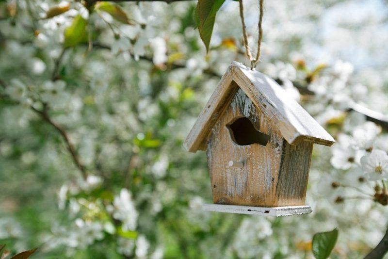 nest box tips