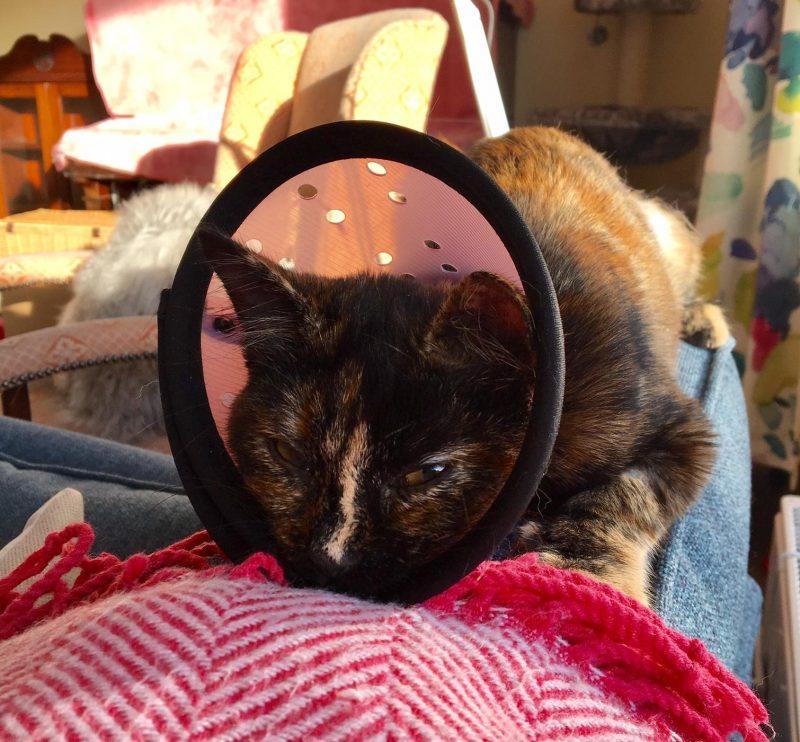 am I a crazy cat lady?