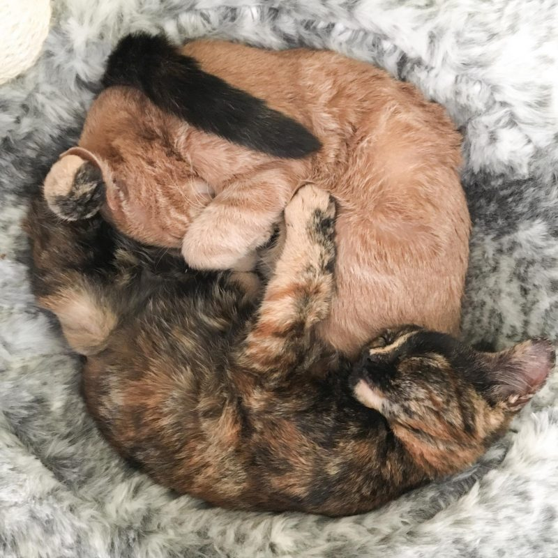 kittens in a pile