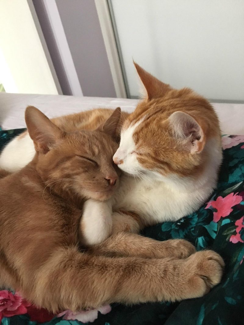 cats hugging each other