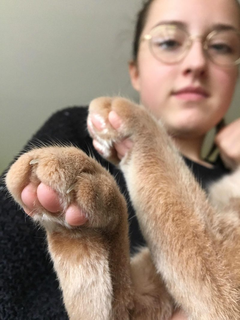 cute cat paws