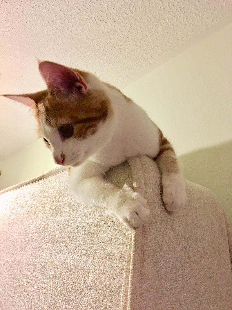 ambitious kitten