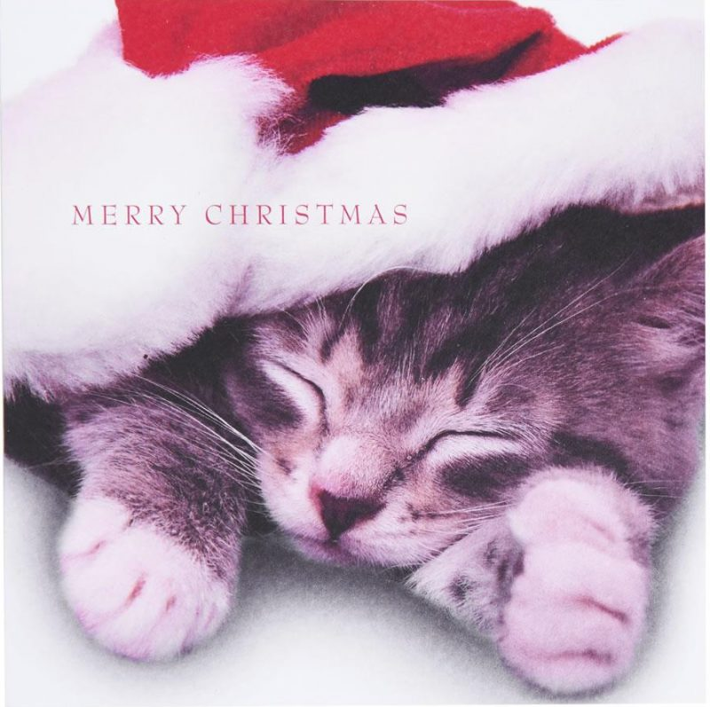 Wilko cat Christmas cards