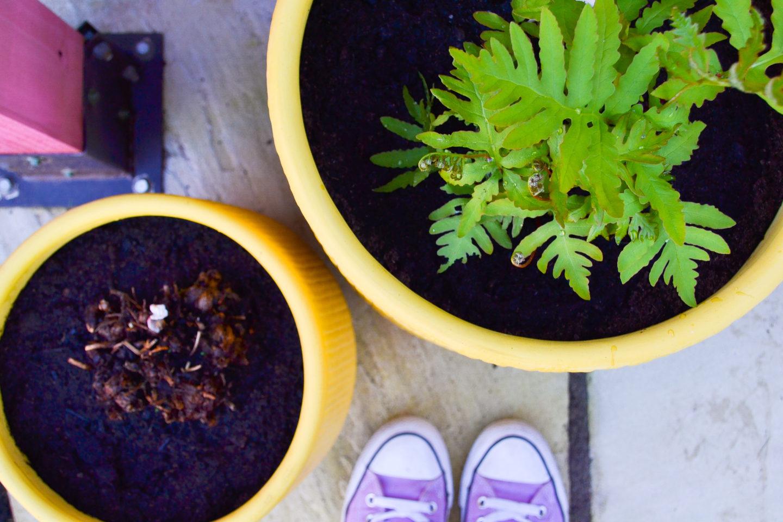 Emerald Plants ferns