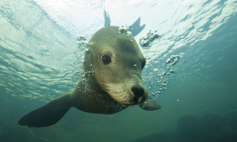 sea lion Nausicaa