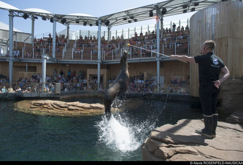 Sea lions at Nausicaa