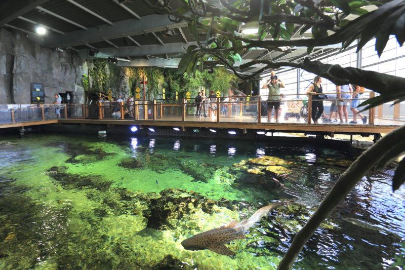 tropical lagoon Nausicaa