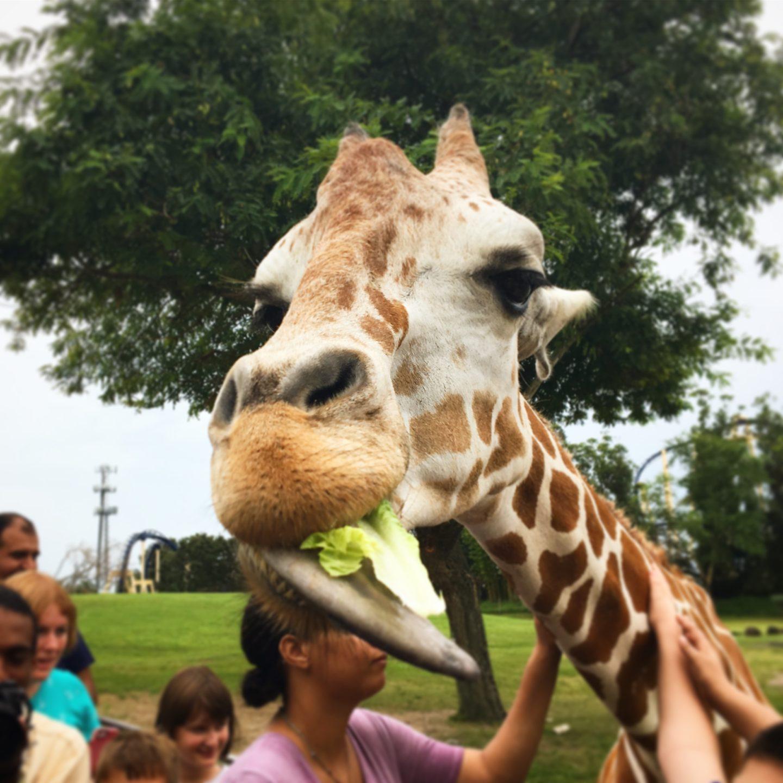 Busch gardens save money booking orlando attraction tickets Attraction Tickets Direct