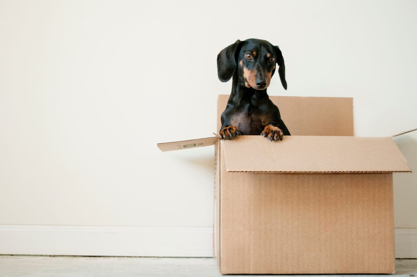 moving house with a pet dog