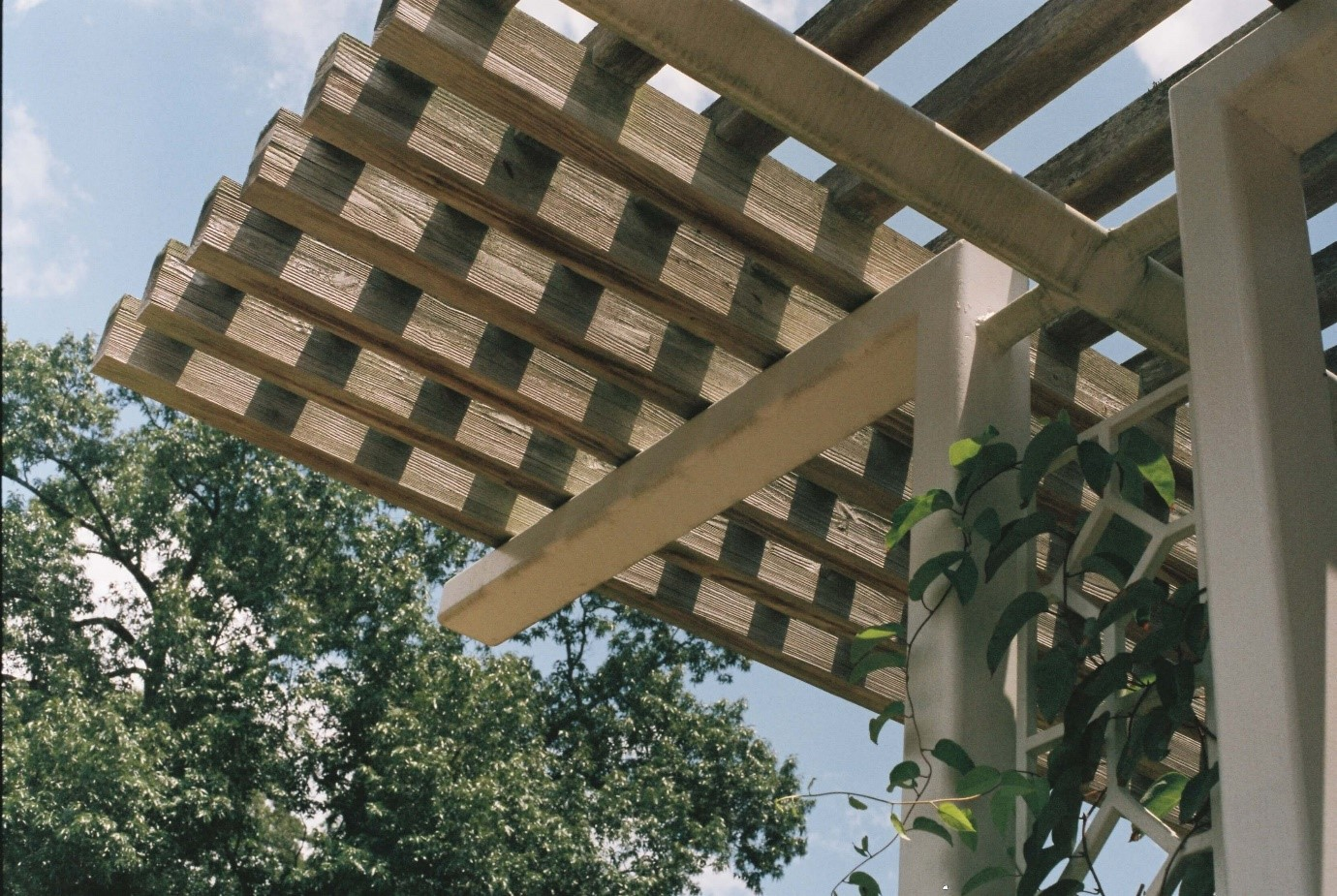 How to create shade in the garden pergola