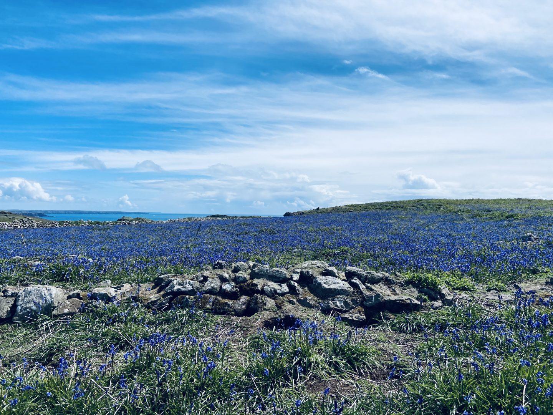 Skomer Island review